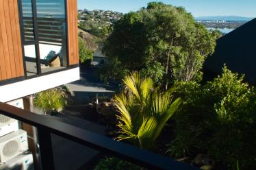 looking down on the nikau palms